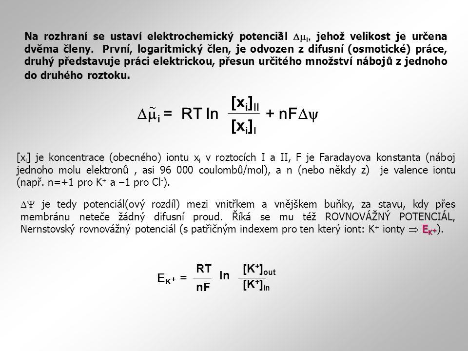[xi]II mi = RT ln + nFD [xi]I ~ EK+ = [K+]out [K+]in RT nF ln ~